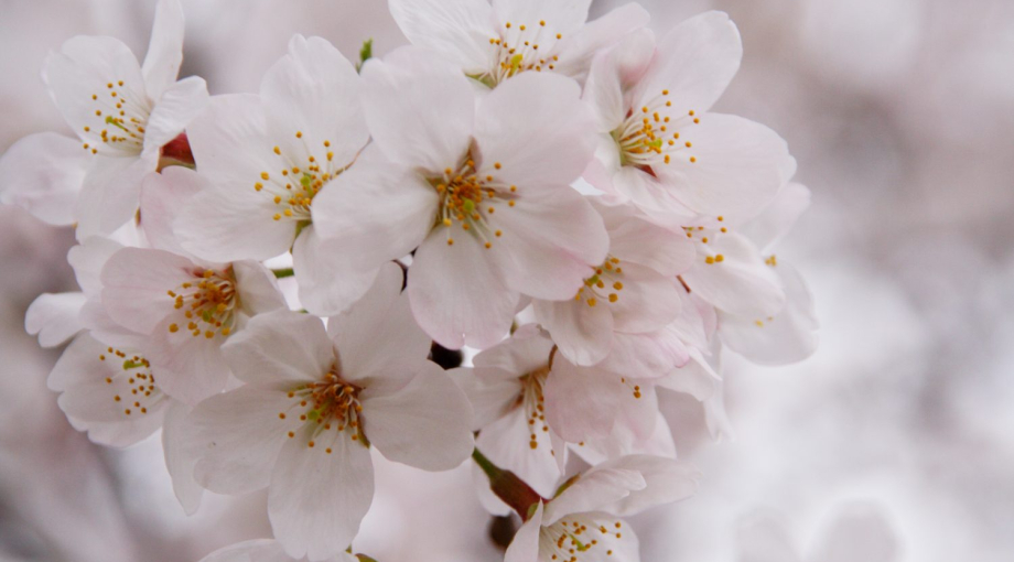 桜が満開です【飯田AR教室・飯田駅前教室】